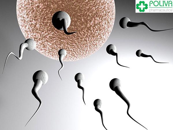 """Tuổi thọ tinh trùng trong môi trường """"cô bé"""": cao nhất được 5-7 ngày."""