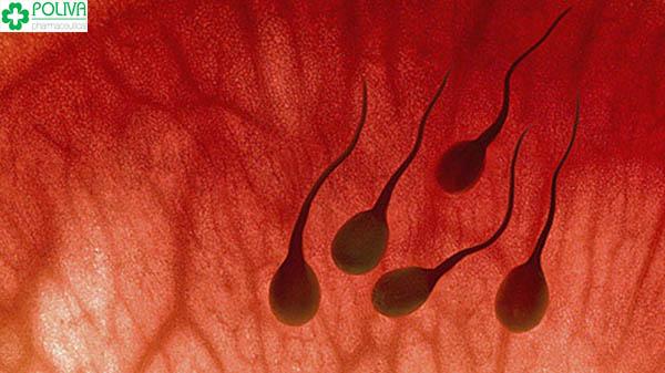 Những nguyên nhân chủ yếu gây ra tình trạng xuất tinh ra máu
