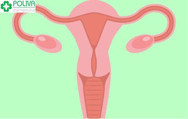 Phụ nữ phát triển bình thường sẽ có hai buồng trứng, cấu tạo theo hai vùng là vùng vỏ và vùng tủy. Phụ nữ phát triển bình thường sẽ có hai buồng trứng, cấu tạo theo hai vùng là vùng vỏ và vùng tủy.