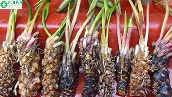 Những thực phẩm ngon - bổ - rẻ chữa yếu sinh lý nam