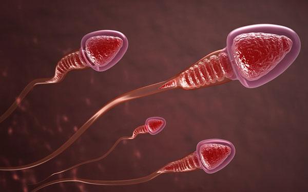 Vì sao tinh trùng của phái mạnh lại sợ thuốc kháng sinh?