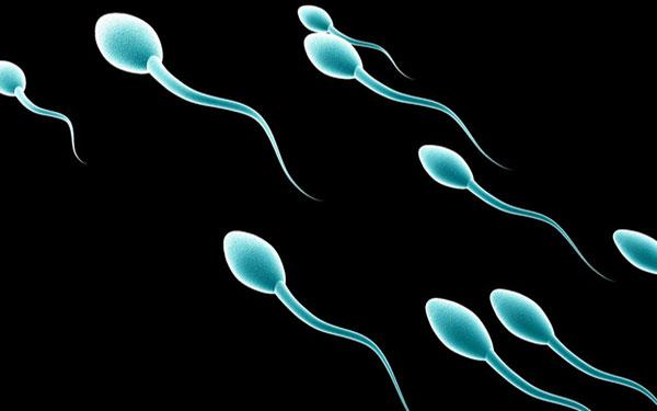 Khám phá những điều thú vị ít ai biết về tinh trùng – Phần 2