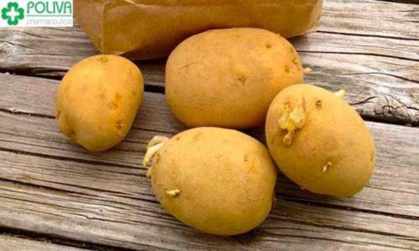 Khoai tây đã mọc mầm tuyệt đối không nên ăn
