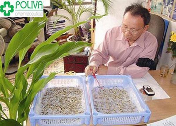 Giáo sư Nguyễn Bá Nam nhận xét rằng bạch tật lê không thu kém bất kì một loại viagra nào.