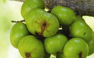 7 loại trái cây ăn càng nhiều yêu càng khỏe