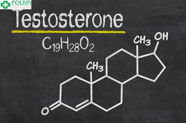 Testosrerone có vai trò quan trọng đối với chức năng sinh lý nam