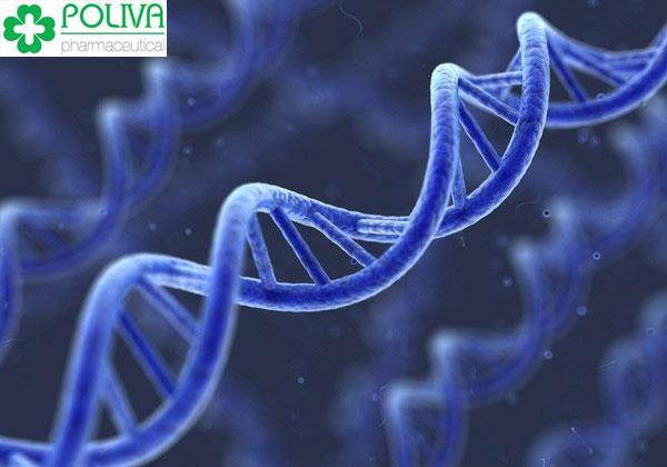 Yế sinh lý nữ do di truyền có nguyên nhân từ sự bất thường nhiễm sắc thể về số lượng, cấu trúc và hội chứng đứt gãy nhiễm sắc thể X