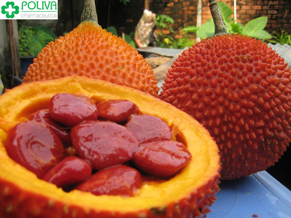 100g màng đỏ của hạt gấc có chứa khoảng 38 mg Beta Carotene