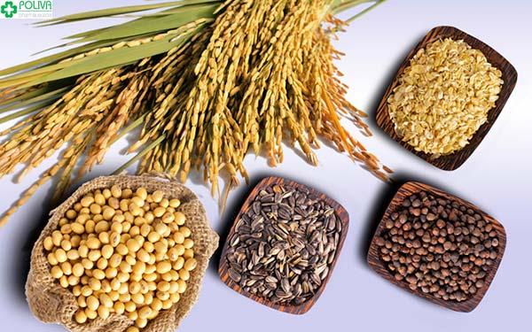 Lúa mạch, ngũ cốc không chỉ cung cấp nhiều dinh dưỡng mà còn là nguồn thực phẩm giúp mẹ sau sinh giảm cân nhanh chóng