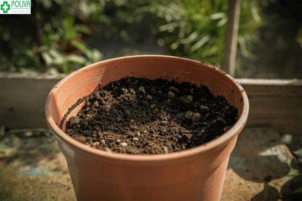 Cách trồng hoa hồng bằng cành phải chọn loại đất tơi xốp