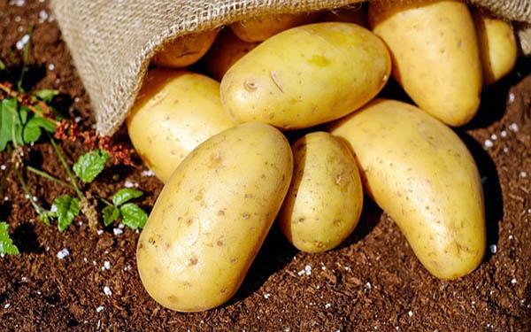 Lo lắng không biết ăn khoai tây có béo không