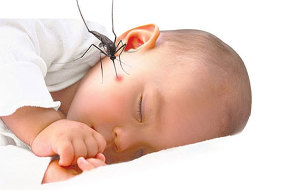 Cách chữa vết muỗi độc đốt: 10 nguyên liệu thiên nhiên bác sĩ khuyên dùng