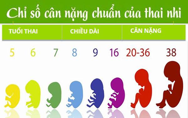 Cập nhật ngay bảng tiêu chuẩn cân nặng thai nhi mới nhất