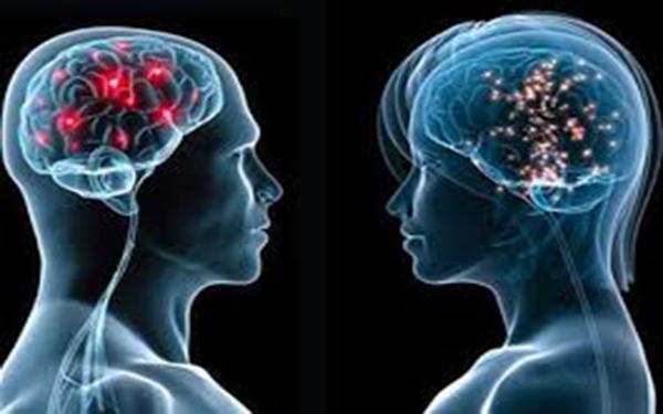 Khám phá cấu tạo não bộ con người và cách phát huy sức mạnh