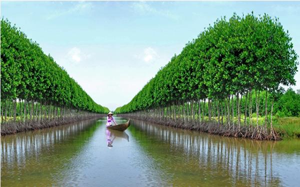 Du lịch rừng U Minh Thượng – Những điều hấp dẫn có thể bạn chưa biết