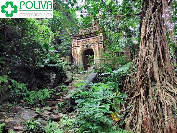 khu du lịch sinh thái chùa trầm