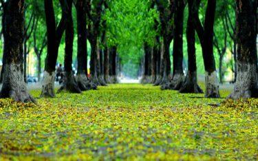 Cùng khám phá những con đường đẹp nhất Hà Nội không thể bỏ lỡ