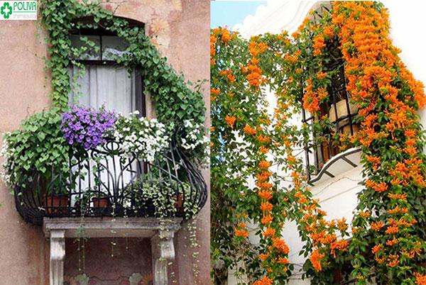 Choáng ngợp với kiểu trang trí cửa sổ bằng cách trồng cây leo xung quanh nhà