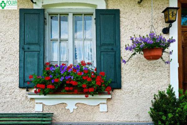 Trang trí cửa sổ bằng hoa từ bên ngoài tạo nét độc đáo cho ngôi nhà