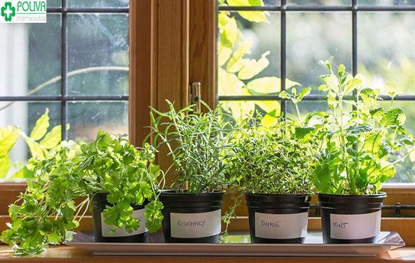 Chậu cây cảnh tăng thêm phần sinh động cho khung cửa sổ