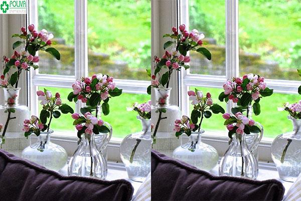 Trang trí cửa sổ bằng những lọ hoa tươi giúp cửa sổ thêm phần sinh động