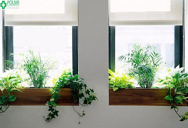 Bạn có thể trang trí cửa sổ với nhiều loại cây khác nhau: cây leo, cây mọc thẳng...