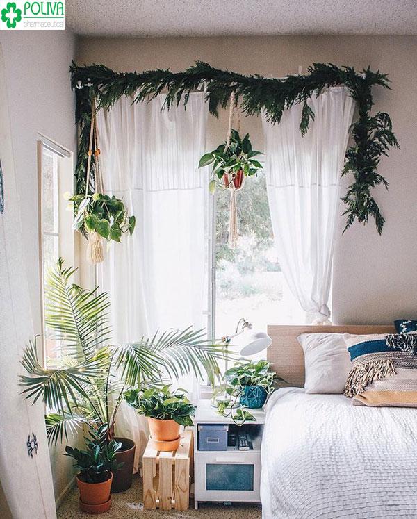 Sáng tạo với sự kết hợp giữa chậu cây cảnh cùng tấm rèm trắng muốt