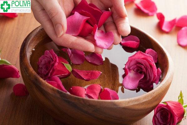 Hoa hồng là thần dược chống lại lão hóa