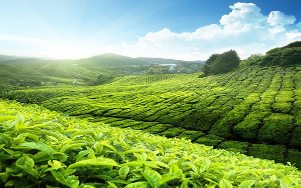 Du lịch Thái Nguyên – Khám phá vẻ đẹp kỳ bí của vùng đất chè xanh