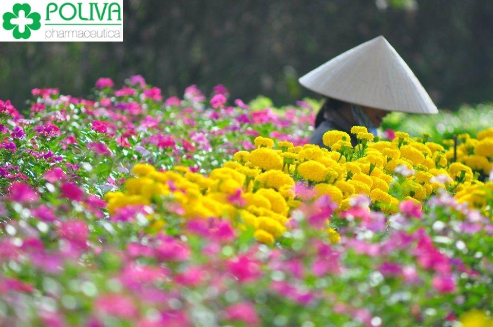 Du lịch Vĩnh Phúc - Địa điểm dã ngoại gần Hà Nội tuyệt vời