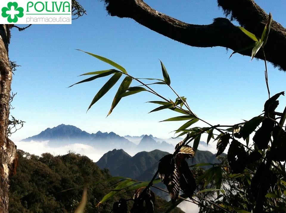 Tổng hợp các kinh nghiệm du lịch Lai Châu tự túc mới nhất