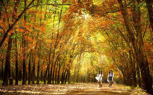 Lạc lối với những địa điểm du lịch Bình Phước cuốn hút