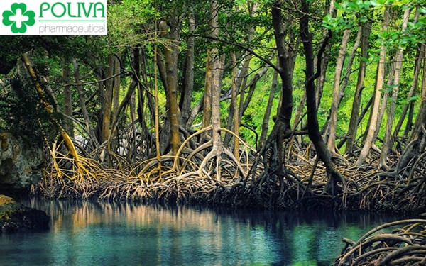Bí ẩn tại vườn quốc gia Mũi Cà Mau có thể bạn chưa biết