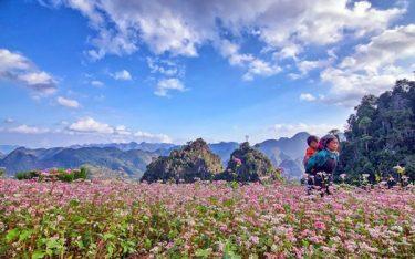 Phượt Hà Giang – Khám phá vùng đất hoa tam giác mạch tươi đẹp