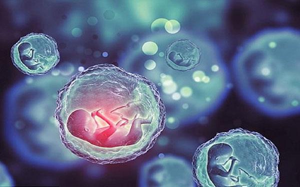 Thời điểm dễ thụ thai nhất là khi nào? Dấu hiệu rụng trứng chính xác