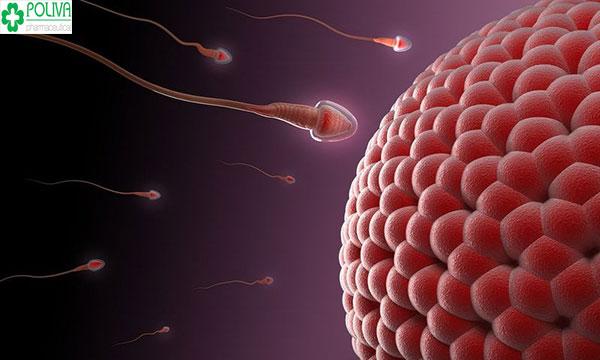 Thụ thai là gì? Quá trình thụ thai diễn ra như thế nào?