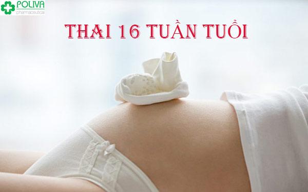 Thai 16 tuần tuổi phát triển có gì mới mẻ?