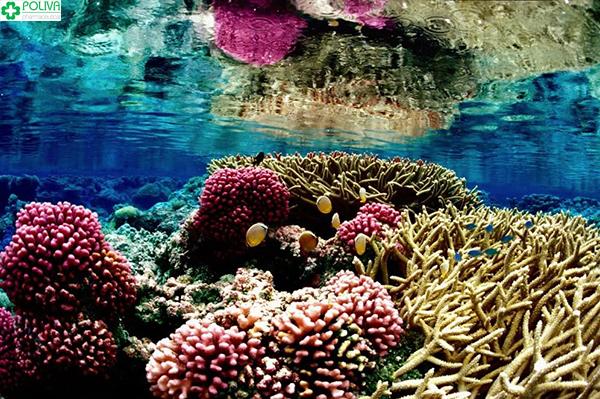 Những rặng san hô tuyệt đẹp đang đợi bạn chiêm ngưỡng