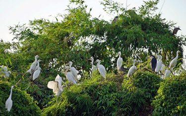 Khám phá Đảo Cò Chi Lăng Nam – Vẻ đẹp yên bình mê hoặc lòng người