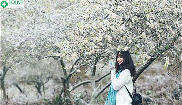 Tháng 3 là mùa hoa mận nở rộ, trắng xóa một vùng trời