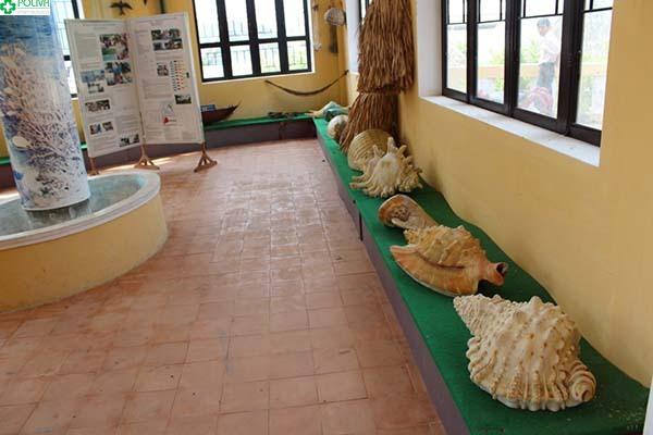 ....trưng bày rất nhiều hiện vật về biển Cù Lao