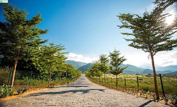 Con đường tuyệt đẹp dẫn vào Làng Mông Cổ Ninh Thuận
