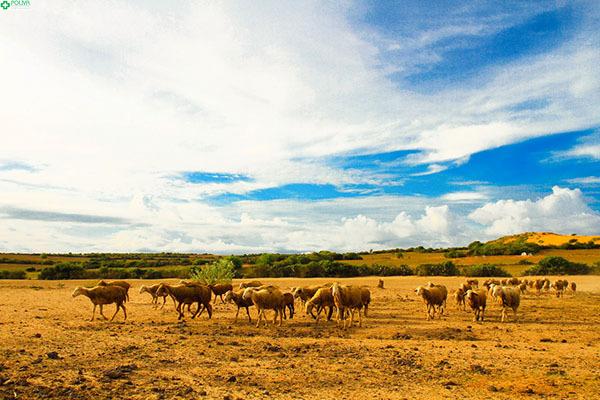 Thảo nguyên Làng Mông Cổ