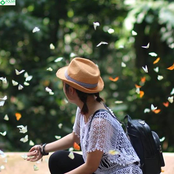 Mùa bướm tháng 5 rợp trời Cúc Phương.