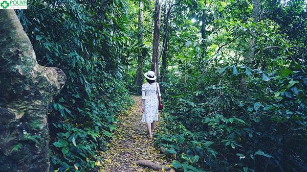 Dạo bước Vườn Quốc gia Cúc Phương sẽ giúp tâm hồn bạn thanh thản!