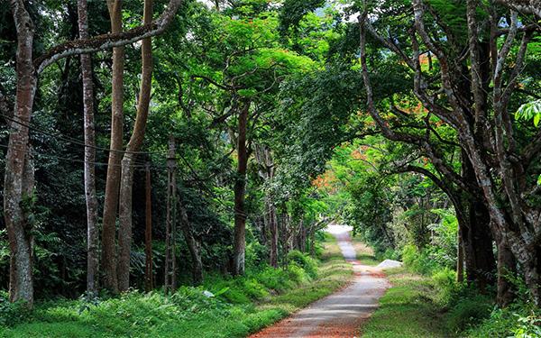 Vườn Quốc gia Cúc Phương : Bạn đã thử khám phá chưa?