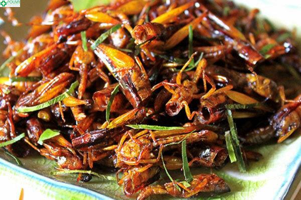 Châu chấu rang lá chanh là một món ăn rất thú vị