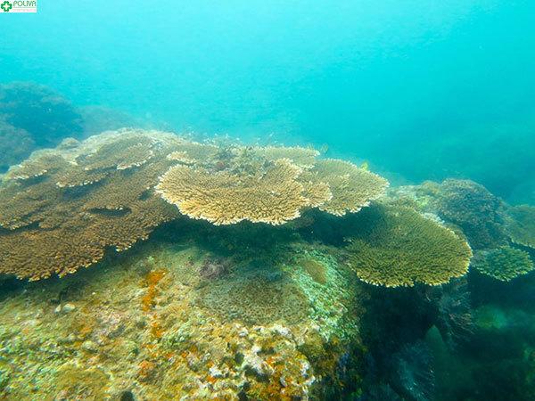 Rặng san hô huyền bí đang đợi bạn đến khám phá
