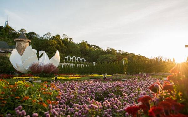 """Đẹp """"hút hồn"""" làng hoa tình yêu trên đất Đà Nẵng"""