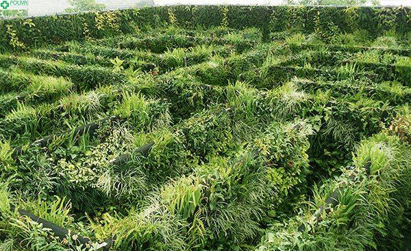 Lạc vào mê cung Vườn Bí Ẩn khám phá nhiều điều thú vị